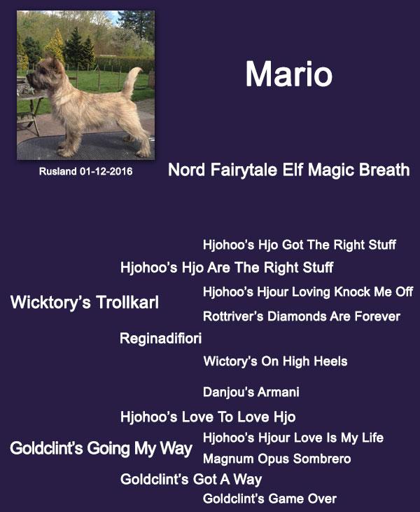 Mario stamboom