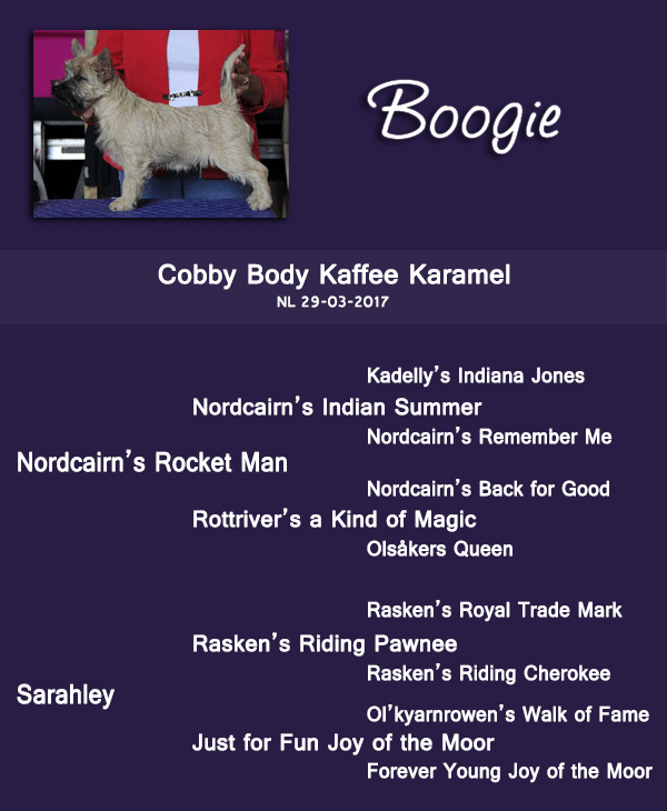 Coby Body Kaffee Karamel