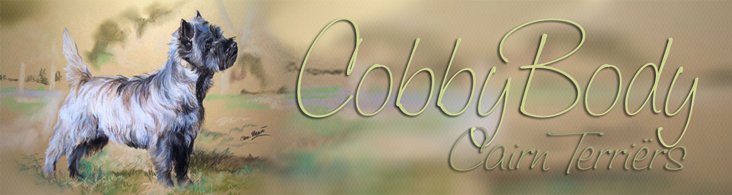 Cobby Body Cairn Terriers